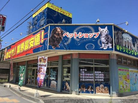【20~30代活躍中!】『動物が好き!』その気持ちが一番大切Coo&RIKUの店舗販売スタッフ