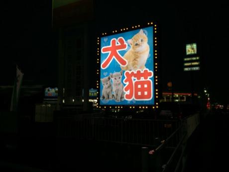 動物病院の求人 - 宮城県   ハローワークの求人を検索