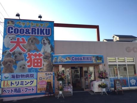 『動物が好き!』その気持ちが一番大切ペットショップCoo&RIKUの店舗販売スタッフ