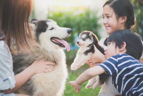ブリーディング施設『千葉Dog Field』のスタッフを大募集!!