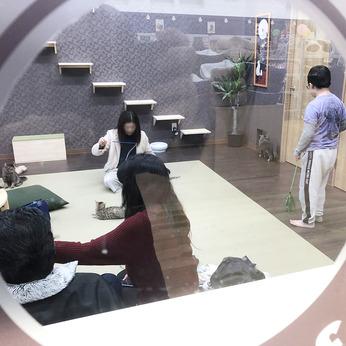 Coo&RIKU(クーアンドリク) 【猫カフェ併設!】フレスポ小松店の ...